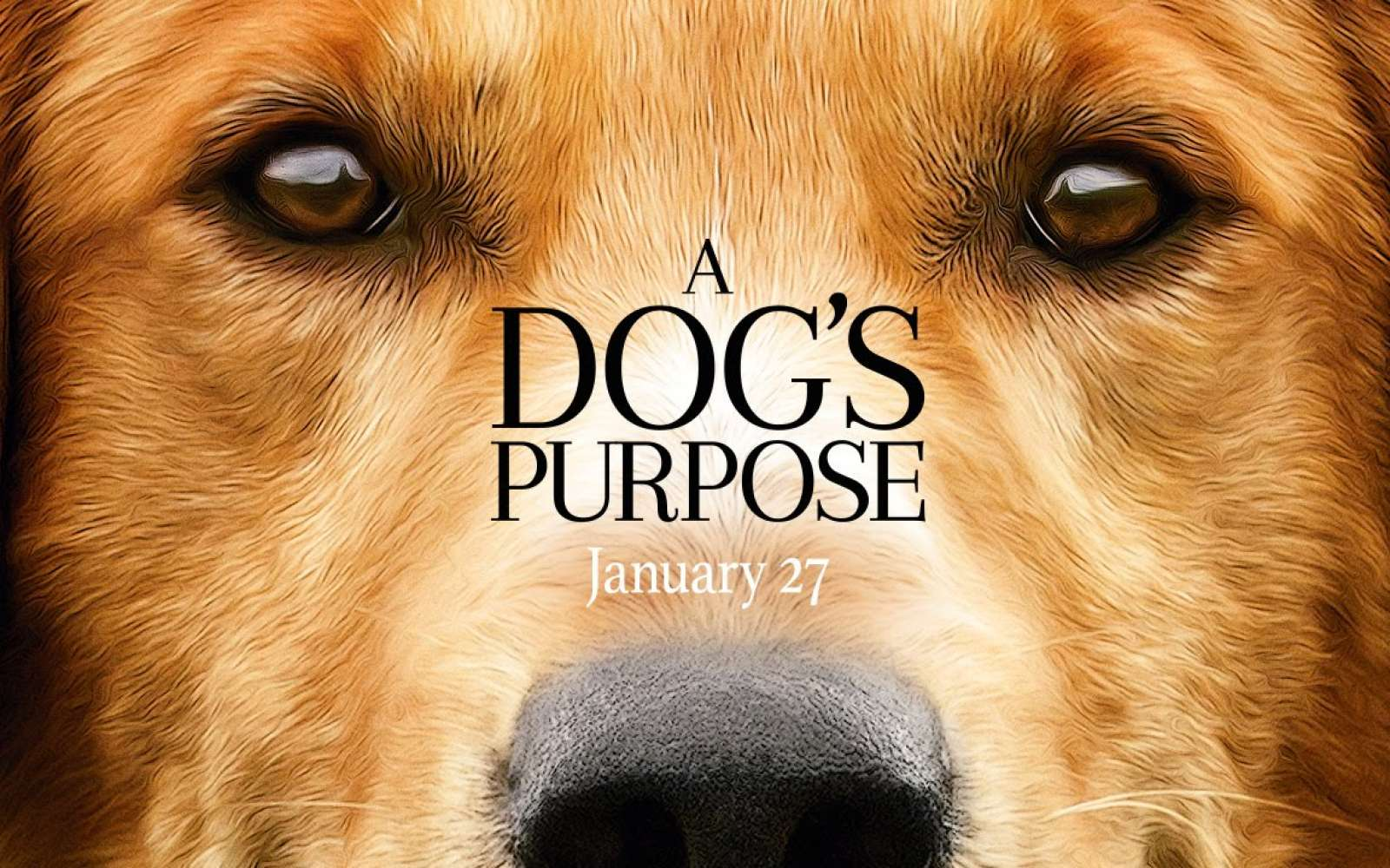 10 Of The Best Quotes From 'A Dog's Purpose'
