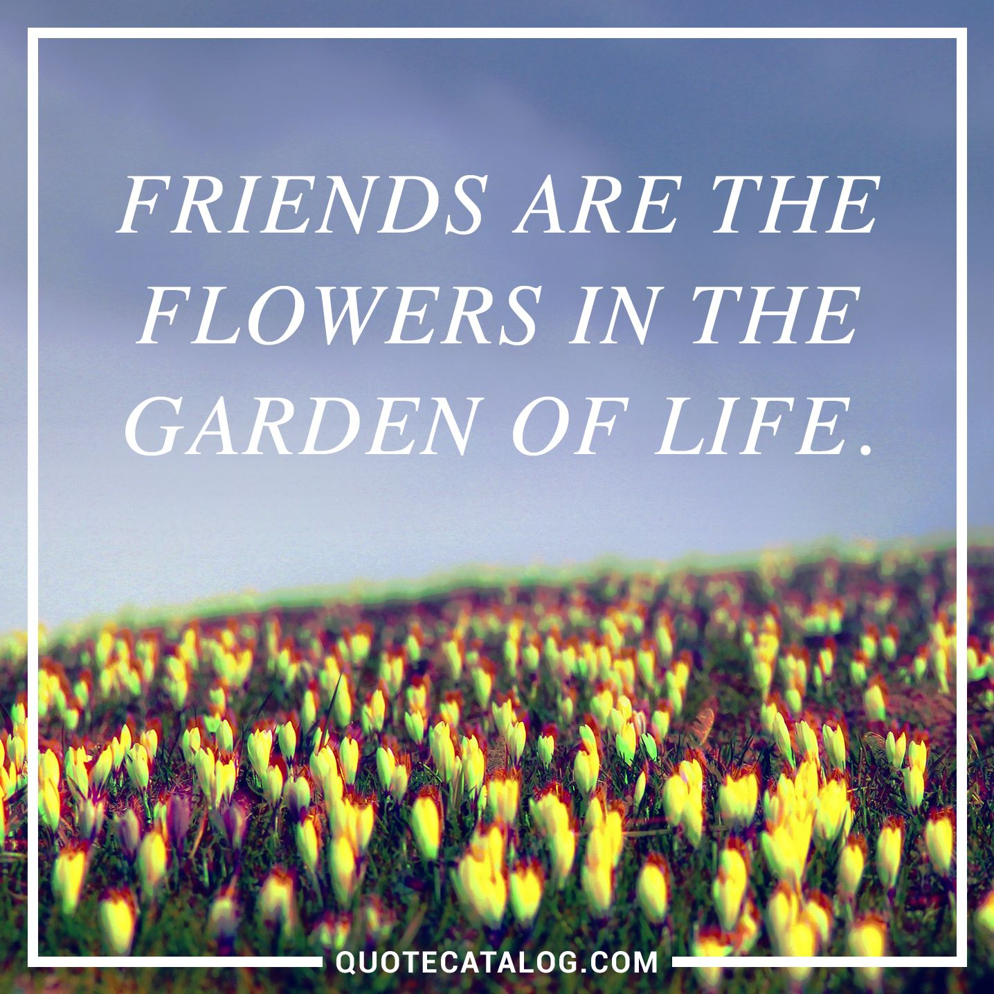 Friends Are The Flowers In The Garden Of Life. U2014 Unknown