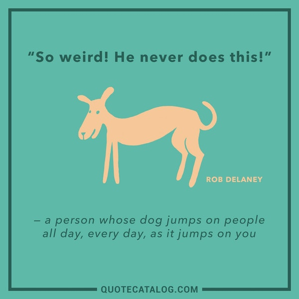 """So weird! He never does this!"" - a person whose dog jumps on people all day, every day, as it jumps on you — Rob Delaney"
