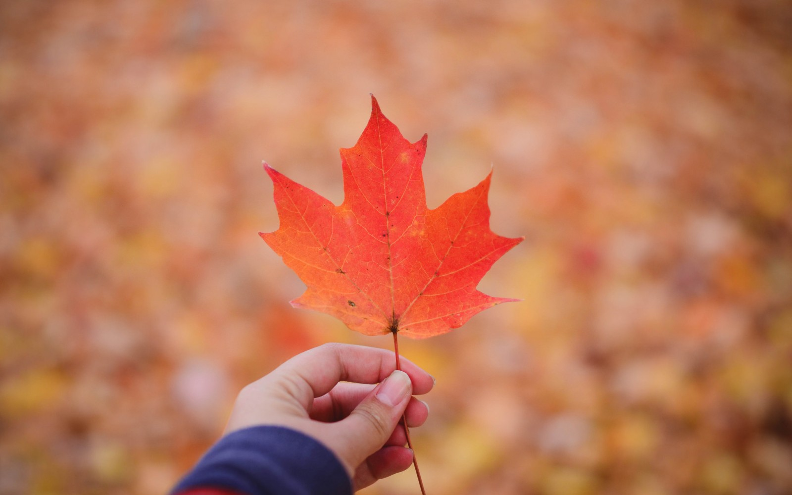 27 Fall Quotes To Celebrate The Best Time Of The Year
